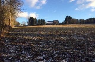 Grundstück zu kaufen in Beyenburgerstrasse 37, 58332 Schwelm, Grünland/ Wald/ Weide/ Wiese/ Hobbyland/ Pferdeweide