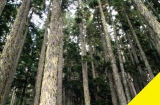 Grundstück zu kaufen in 97786 Motten, Fichtenwald 1,6 ha in der Rhön - durchforstet mit Ernte-Gutachten